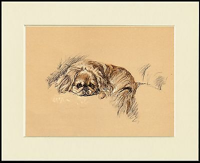 Pekingese Charming Image Little Dog Print Mounted Ready To Frame