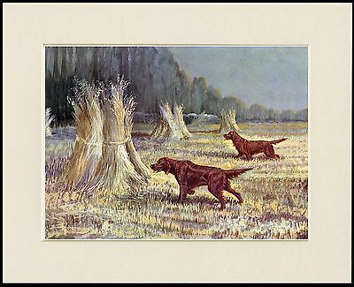 Irish Setter Dogs Working In A Cornfield Lovely Dog Print Mounted Ready To Frame