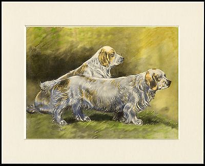 Clumber Spaniel Two Old Style Dogs Lovely Dog Print Mounted Ready To Frame