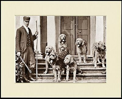 Otterhound Huntsman And Dogs Lovely Dog Print Mounted Ready To Frame