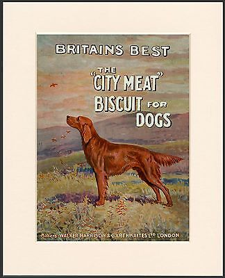 Irish Setter Great Dog Food Advert Print Mounted Ready To Frame