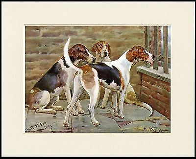 Foxhound Lovely Dog Print Mounted Ready To Frame