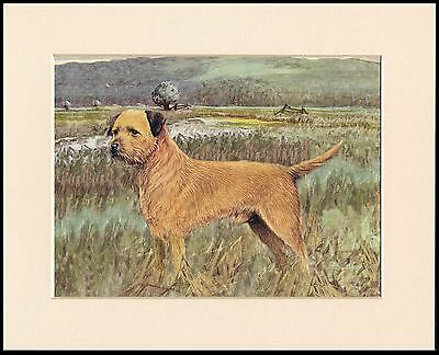 Border Terrier Charming Dog Art Print Mounted Ready To Frame