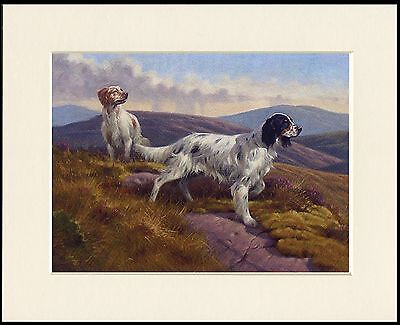 English Setter Lovely Little Dog Print 2 Dogs On Moor Mounted Ready To Frame
