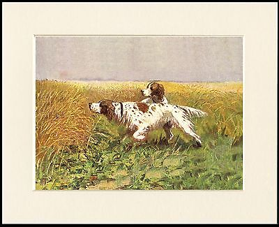 Irish Red And White Setter Dogs At Work Dog Print Mounted Ready To Frame