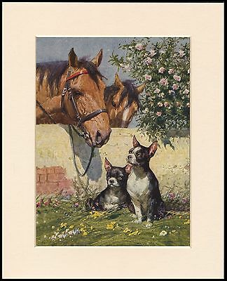 Boston Terrier Dogs And Horses Lovely Dog Print Mounted Ready To Frame