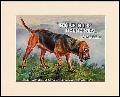 Bloodhound Dog Food Advert Lovely Little Dog Print Mounted Ready To Frame