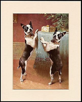 Boston Terrier Two Dogs Christmas Tree Lovely Dog Print Mounted Ready To Frame