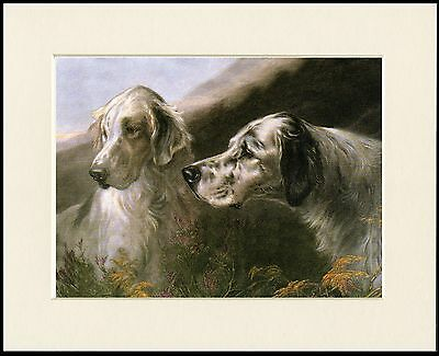 English Setter Lovely Little Dog Print Two Heads Mounted Ready To Frame