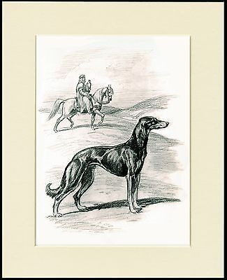 Saluki Lovely Dog Sketch Print Mounted Ready To Frame