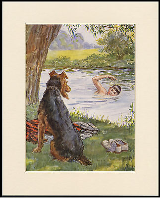 Airedale Terrier Watches Boy Swimming  Vintage Style Dog Print Ready Mounted