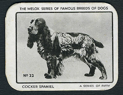 COCKER SPANIEL VERY RARE MELOX FAMOUS DOG BREEDS TRADE CARD FROM 1937