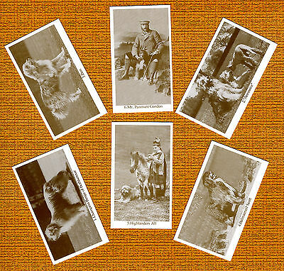 Bearded Collie Named Set Of 6 Dog Photo Trade Cards