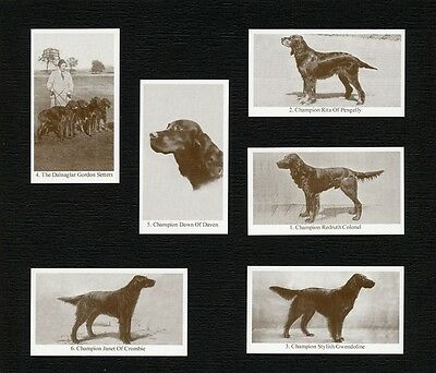 Gordon Setter Dogs Of Yesteryear 2Nd Series 6 Named Dog Photo Trade Cards