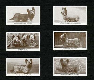 Skye Terrier Dogs Of Yesteryear 2Nd Series 6 Named Dog Photo Trade Cards