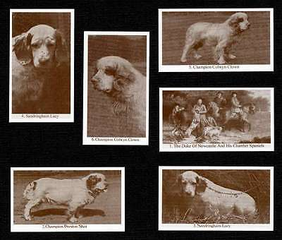 Clumber Spaniel Dogs Of Yesteryear Set Of 6 Dog Photo Trade Cards