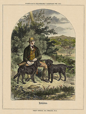 CURLY /& FLAT COATED RETRIEVER DOGS MAN AND GUN LOVELY DOG PRINT READY MOUNTED