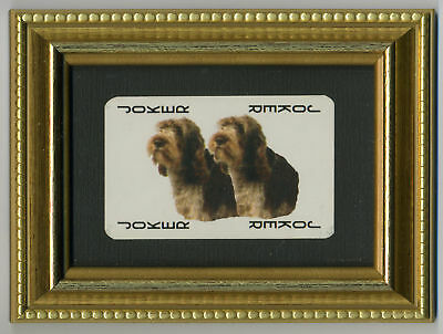 Italian Spinone Collectable Playing Card Ready Framed