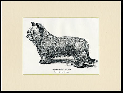 Skye Terrier Named Dog Rare Antique 1900 Dog Print Mounted Ready To Frame