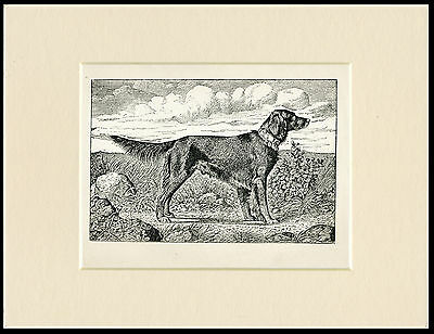 Gordon Setter Antique 1900 Dog Print Mounted Ready To Frame