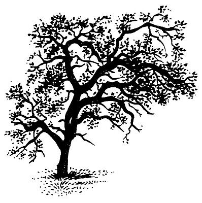 Unmounted Rubber Stamps, Scenic Stamps, Nature, Trees, Leaves, Bold Oak Tree