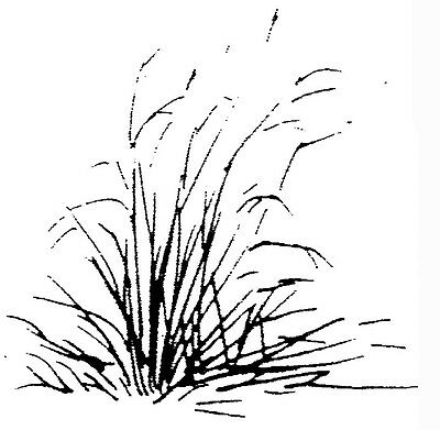Unmounted Rubber Stamps, Scenic Stamps, Grass, Rubber Stamping, Plants, Scenery