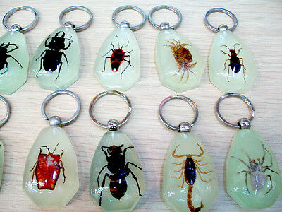 Lots 24pcs amber real inside insect glow light treasures Key pendant mixed