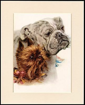 Brussels Griffon And Bulldog Charming Dog Print Mounted Ready To Frame