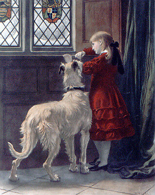 DEERHOUND IRISH WOLFHOUND LURCHER DOG FINE ART ENGRAVING PRINT - Briton Riviere