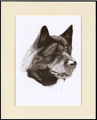 Akita Lovely Dog Head Study Sketch Print Mounted Ready To Frame