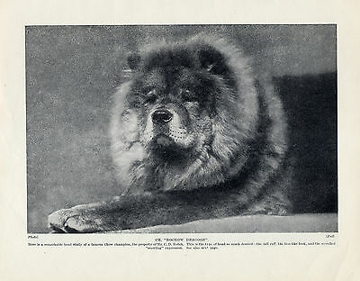 """Chow Chow Champion Dog """"Rowchow Dragoon"""" Lovely Original Print Page From 1934"""