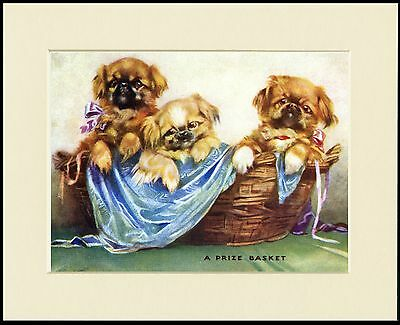 Pekingese Little Dogs In A Basket Charming Dog Print Mounted Ready To Frame