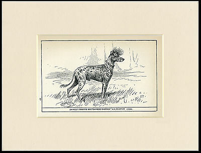 Chinese Crested Rare Antique 1900 Wood Block Engraving Dog Print Ready Mounted