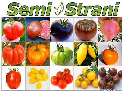 150 Seeds of RARE TOMATOES COLL. 1 RICH IN NUTRIENTS IN 15 VARIETIES