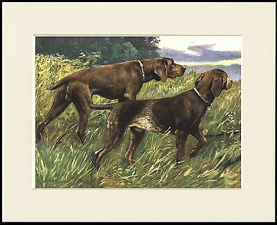 German Shorthaired Pointer Two Dogs Great Dog Print Mounted Ready To Frame