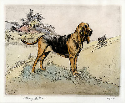 BLOODHOUND DOG LIMITED EDITION ENGRAVING PRINT  - by the Late Henry Wilkinson