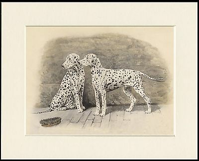Dalmatian Two Dogs Great Dog Print Mounted Ready To Frame