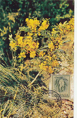 Croydon North NSW Australia wattle flower maximum card with 2/3 stamp value