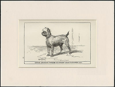 Brussels Griffon Old Antique 1900 Engraving Named Dog Print Ready Mounted