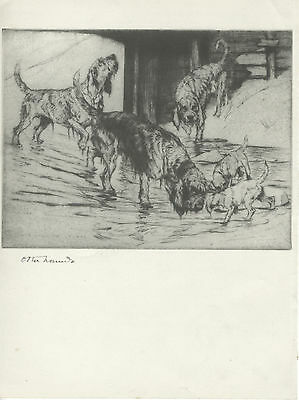 OTTERHOUND AND BORDER TERRIERS LOVELY OLD 1938 DOG ART PRINT by VERNON STOKES