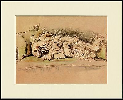 Pekingese Sleeping Dog Lovely Print Mounted Ready To Frame