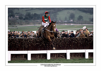 Little Owl Horse Racing A4 Photo Print Jim Wilson Cheltenham Gold Cup 1981