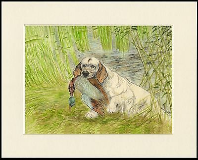 Clumber Spaniel Retrieving Duck Lovely Dog Print Mounted Ready To Frame