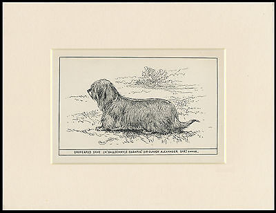 Dropeared Skye Terrier Antique 1900 Engraving Named Dog Print Ready Mounted