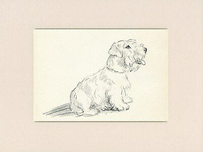 SEALYHAM TERRIER LOVELY OLD 1946 DOG ART PRINT by MAC LUCY DAWSON READY MOUNTED