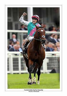 Frankel Career Stats Horse Racing  A4 Print Photo Tom Queally 14 From 14  5