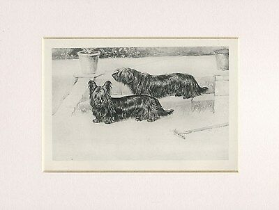 SKYE TERRIER DOGS RARE 1894 ANTIQUE DOG PRINT by ARTHUR WARDLE READY MOUNTED