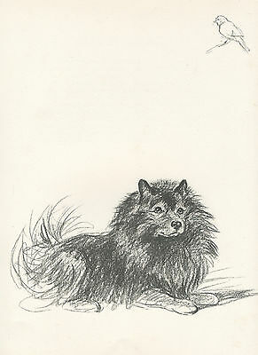 KEESHOND WATCHES BIRD CHARMING 1930'S DOG ART SKETCH PRINT by MAC LUCY DAWSON