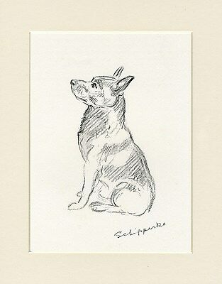 SCHIPPERKE SEATED DOG LOVELY OLD 1930'S SKETCH PRINT by MAC LUCY DAWSON MOUNTED