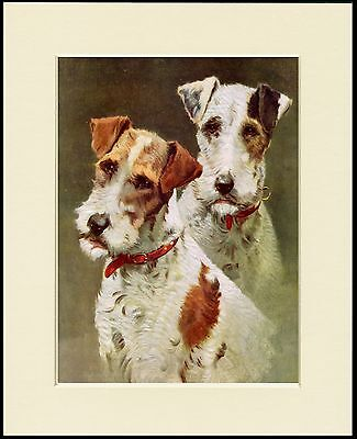 Wire Fox Terrier Dogs Head Study Lovely Dog Print Mounted Ready To Frame